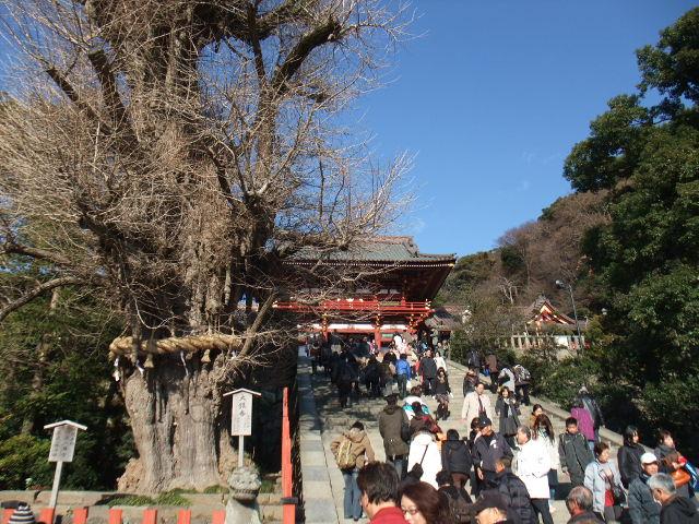 鎌倉に行ってきました&<br />  今週のライブインながとも情報